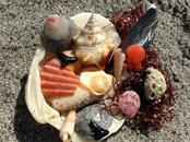 Beach Treasures. - Vacant Land for sale at 6360 Manasota Key Rd #b, Englewood, FL 34223 - MLS Number is D6103470