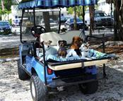 Golf carts and dogs- a typical find in Boca Grande - Single Family Home for sale at 1600 E Railroad Ave, Boca Grande, FL 33921 - MLS Number is D6108744